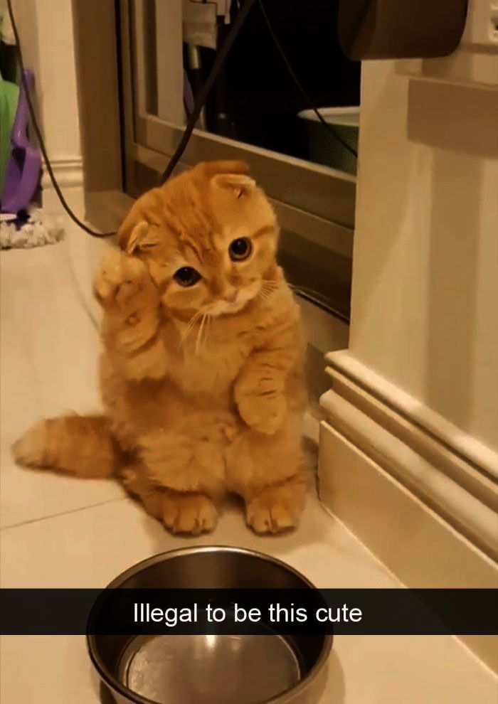 Funny Cat Face shop repin