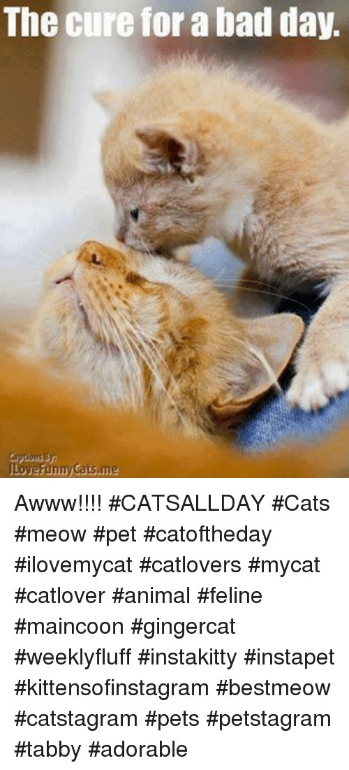 funny cat · next Bad Day Memes and A The cure for a bad day Love