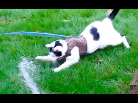[New] Cute Cat Water Play video Summer Fun for Kal the Rescue Cat [Sweet movie]