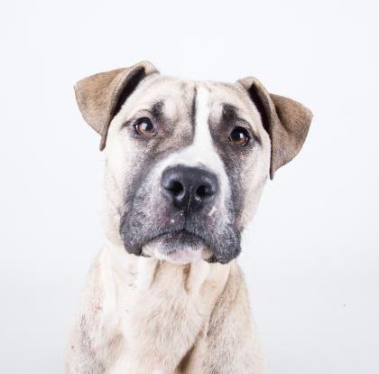 Jamaica URGENT Dekalb County Animal Shelter in Decatur Georgia ADOPT OR FOSTER