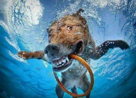 pictures of dogs underwaterLunarology Gallery
