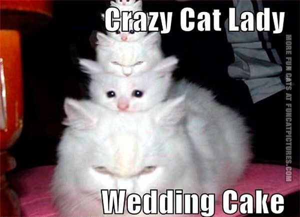 Crazy cat lady wedding cake