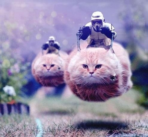 funny star wars speeder bike cats cats