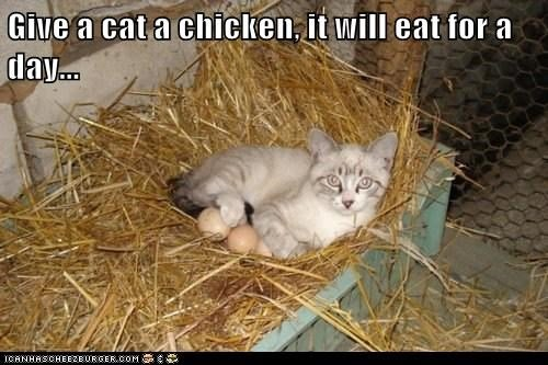 Cats chicken chickens eggs give a man a fish sayings teach teaching