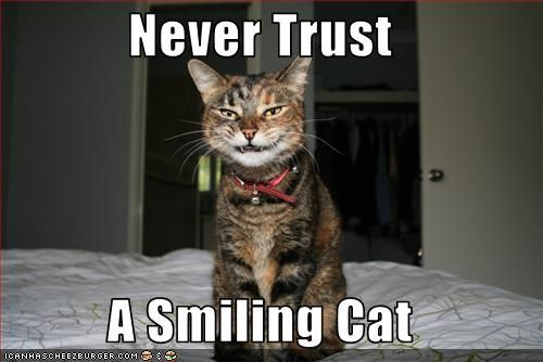 Grasp the Prodigious Cat Pictures with Captions Funny
