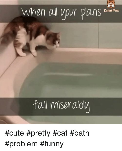 Grasp the Prodigious Funny Cat Memes Bath