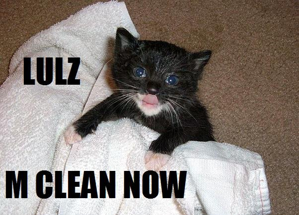 Grasp the Prodigious Funny Clean Cat Pictures