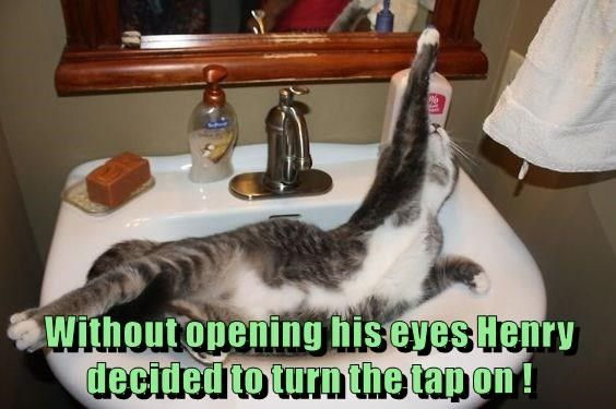 Funny meme of a cat in the sink and about to have the water turned ON