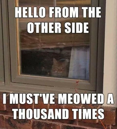 Adele meme of a cat outside the window with her song as the caption