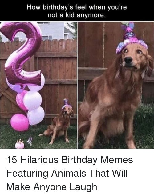 Animals Birthday and Memes How birthday s feel when you re not a