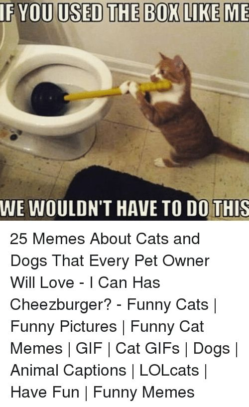 Cats Dogs and Funny IF YOU USED THE BOX LIKE ME WE WOULDN