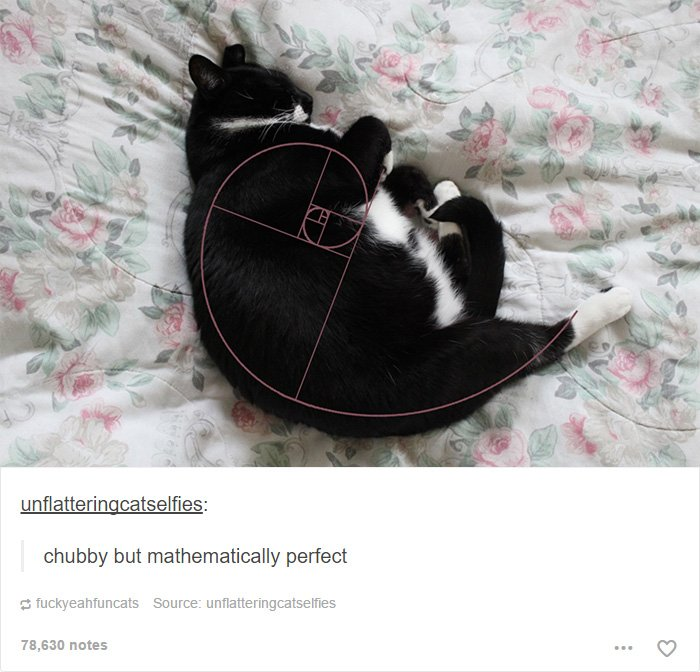 funny tumblr cats 46