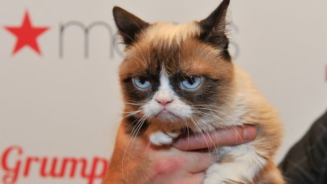Grumpy cat at appearance for Christmas film at Macys in 2014