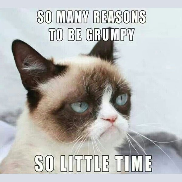 so many reasons so little time meme posted by fragileheart Grumpy Cat