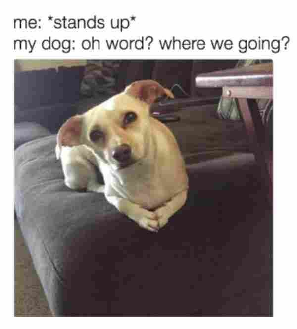 32 Hilarious Dog Memes That Are Just Awesome Viral Memes