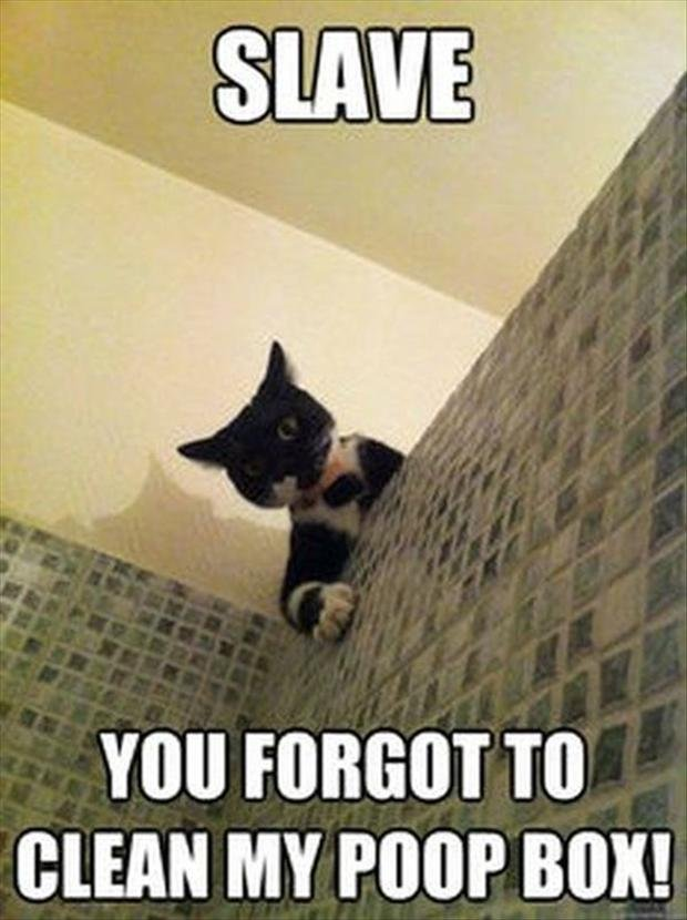 Funny Cat with Captions 27