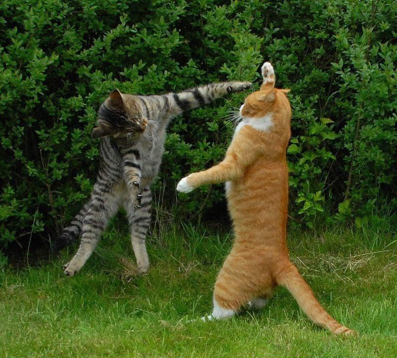 Grasp the Shocking Silly Funny Cat Pictures