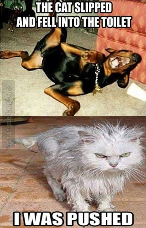 Tee Hee I can so see this with Lilly Guinness and Max Funny Animal Quotes