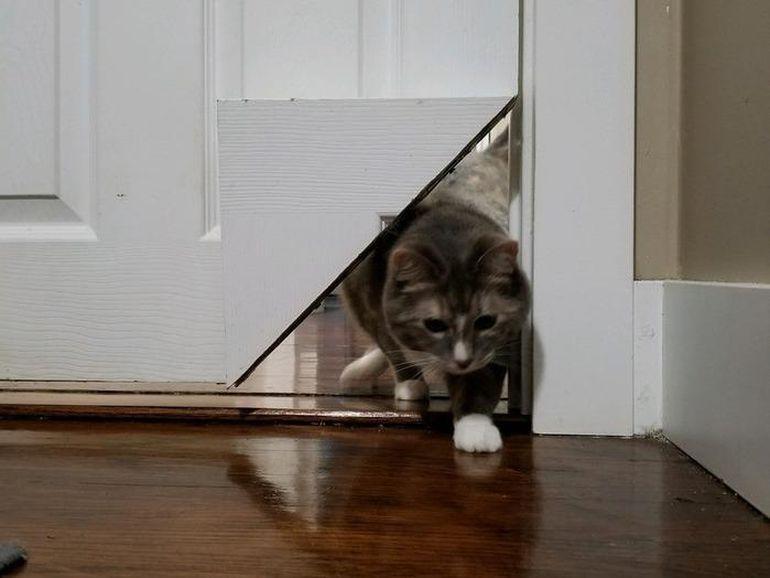 kittykorner1