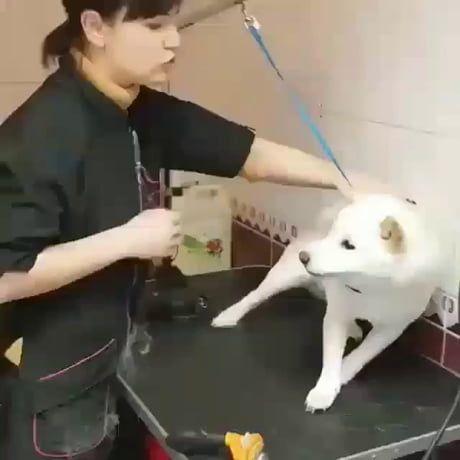 Angery doggo at the vet