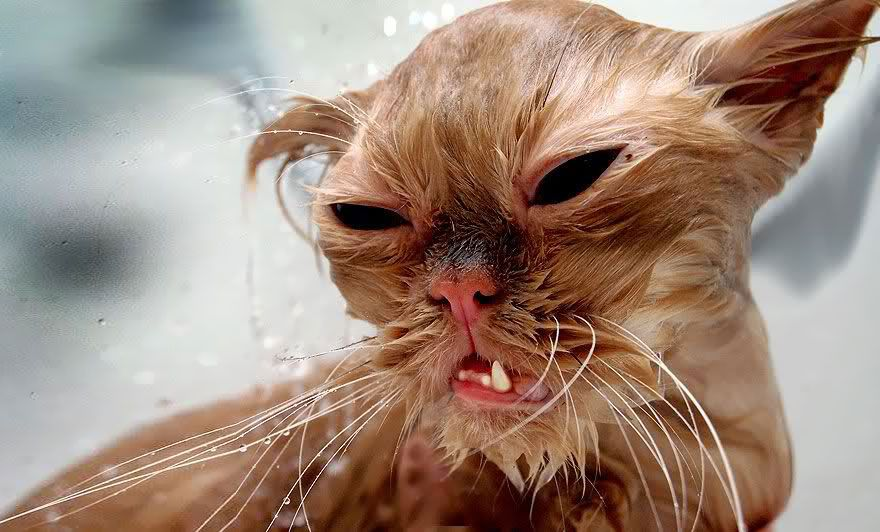 funny wet cats 24
