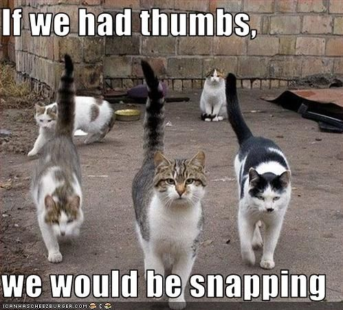 Funny pictures cats would snap if they had thumbs