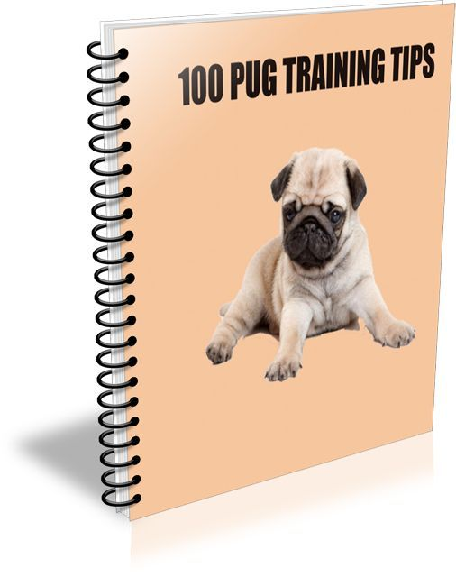 100 Pug Training Tips Free Download to all readers of The Puginton Post