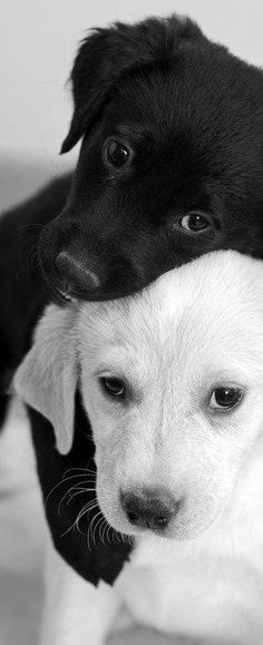 friends quenalbertini Black & white friends Cute Baby Animals Funny Animals