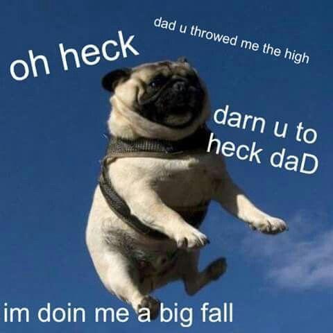 Grasp the Suprising Funny Dog Memes Funny Vlean