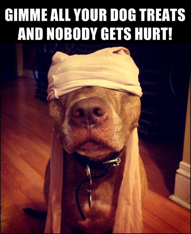 Funny Animal Funny Animals Captions Pitbulls