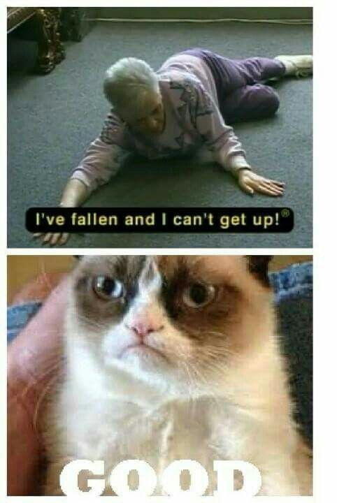 Grasp the Suprising Grumpy Cat Funny Animal Memes