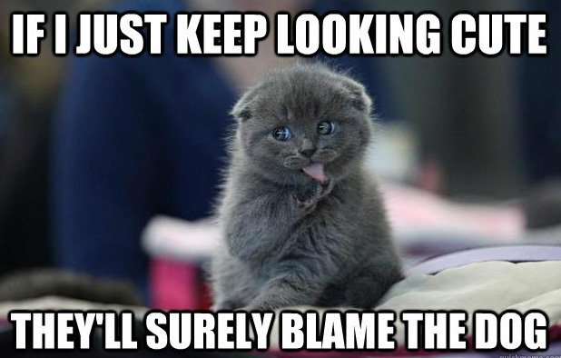If I just keep looking cute they ll surely blame the