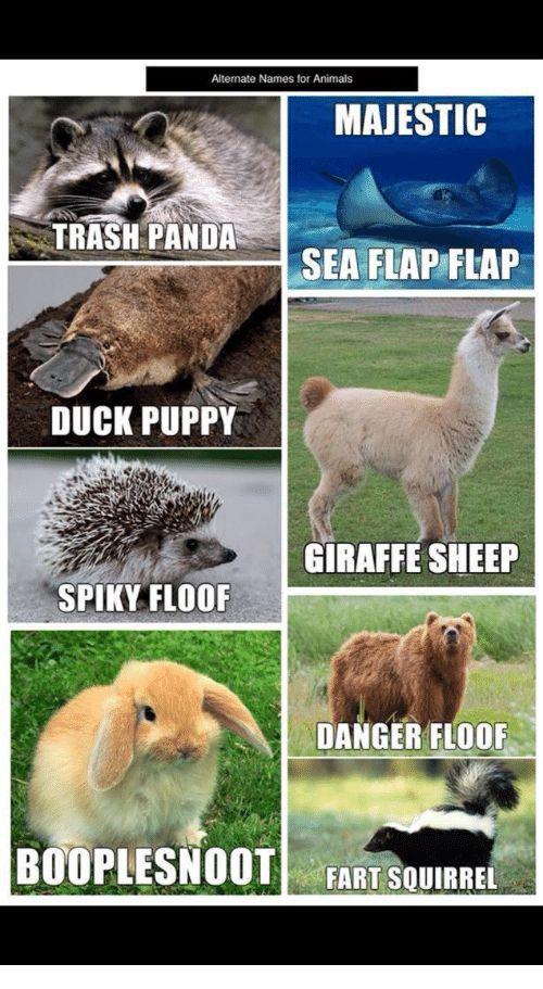 Animals Trash and Panda Alternate Names for Animals MAJESTIC TRASH PANDA SEA FLAP