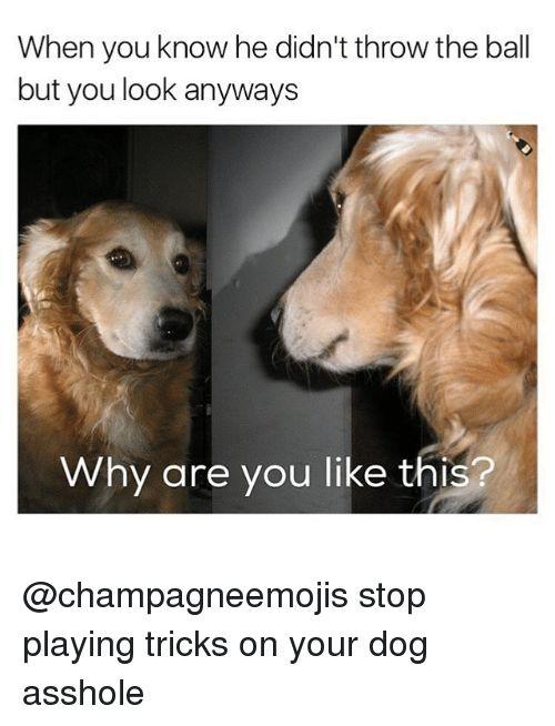 Dogs Asshole