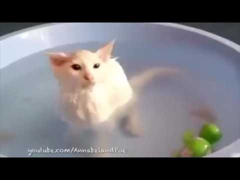 Funny Cats Love Water pilation 2015 Cats That Love Baths Funny Videos 2015