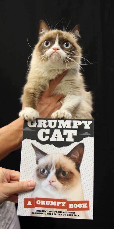 Grumpy Cat Funny Cats Cute Cats Funny Animals Grumpy Cats Grumpy Cat