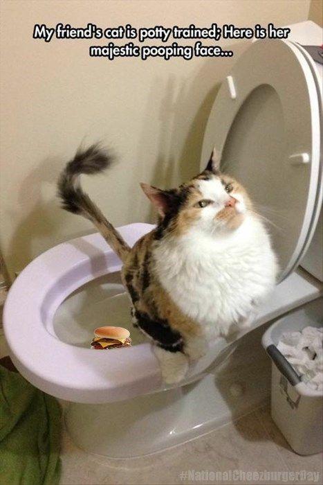 poop inspirational Cats