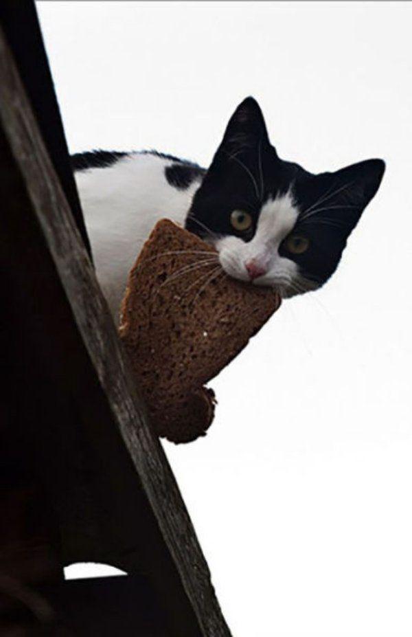cat burglars caught in the act 27 photos 14 Cat burglars caught in the act