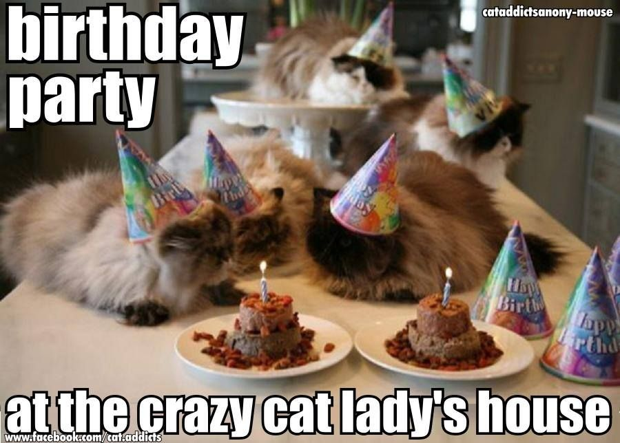 This is something my best friend would love Happy Birthday Cat Cat Birthday