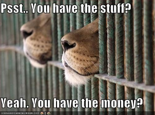 funny lion pictures