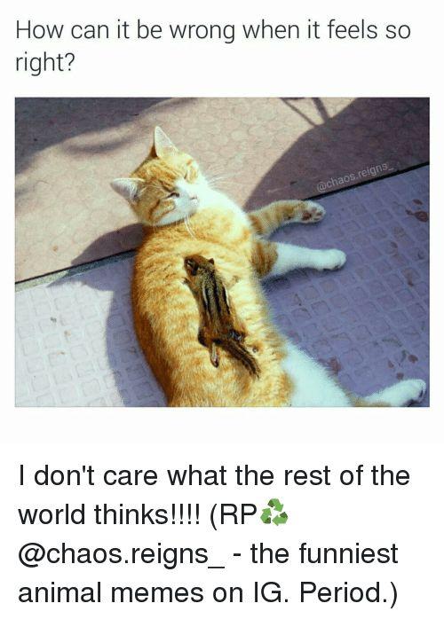 Funniest Animal Memes