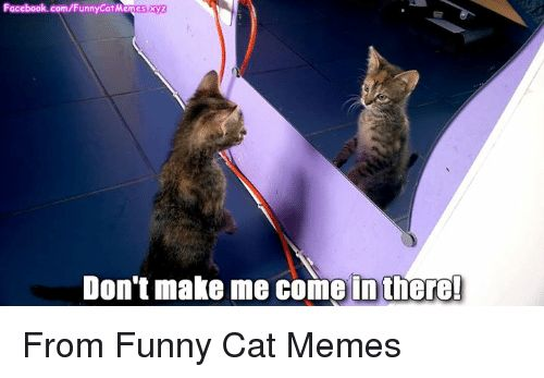 Memes 🤖 and Funny Cats FunnyCatM yz Don