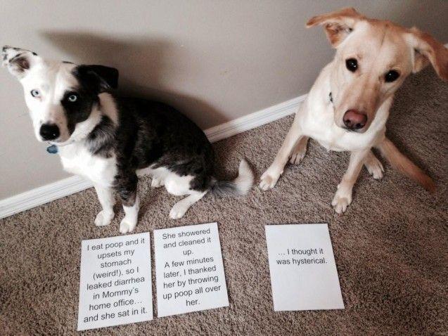 Search Results funnydogshaming Dog Life Pinterest