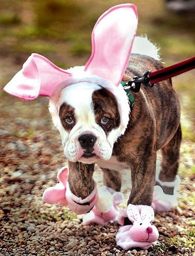 Easter means bunny time And these pet owners have taken it to a whole new level by dressing their pets as Easter bunnies for our and your enjoyment