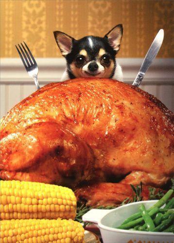 Little Dog Behind Big Turkey Funny Chihuahua Thanksgiving Card by Avanti Press