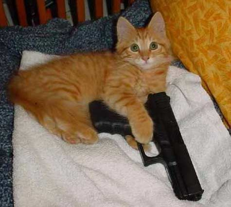 cat with gun by Resident evil nerd on DeviantArt