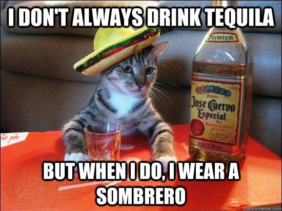 I Don t always drink Tequila But when I do I wear a sombrero tequila cat quickmeme
