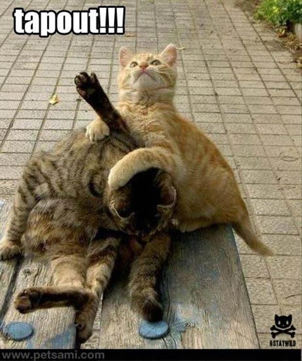 Crazy cat lady · Random Funny