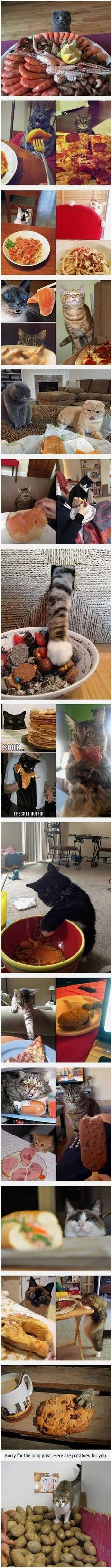 Cats hunting your dinner Cat owners will understand 9GAG Funny Pet Memes