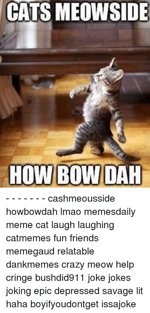 Memes 🤖 and Bow CATS MEOWSIDE HOW BOW DAH